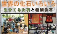 http://www.okuina.com/wp/wp-content/uploads/2020/01/キャプチャ121-wpcf_200x120.jpg